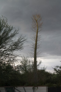 Storm clouds at the Desert Botanical Garden photo by MJK Events