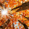autumn-leaves-equinox