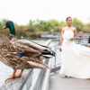Ducks sitting on the railing overlooking the water with the bride and groom standing in the background